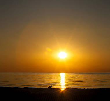 Sunset Silver Beach by Laura Greene