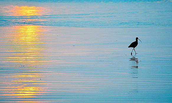 Sunset Stroll by AJ  Schibig