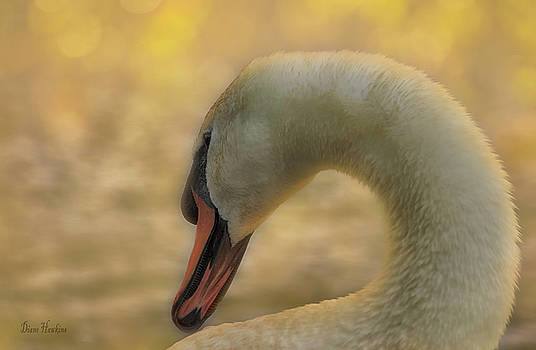 Sunset swan by Diane Hawkins