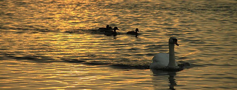 Martina Fagan - Sunset Swim