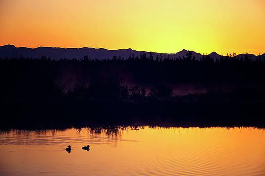 Sunset swim by Sue Collura