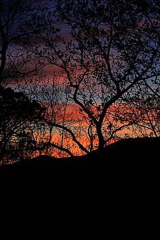 Sunset by Tammy Schneider