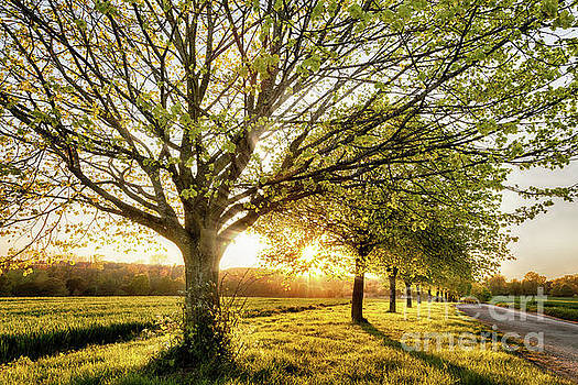 Simon Bratt Photography LRPS - Sunset through a line of rural trees