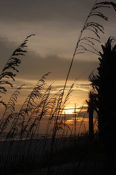 Sunset through Seagrass by Beverly Hammond