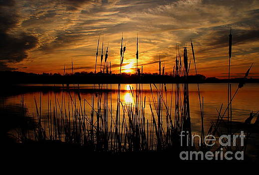Sunset through the Cattails by Lennie Malvone