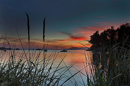 Sunset Through The Reeds by Thomas Ashcraft