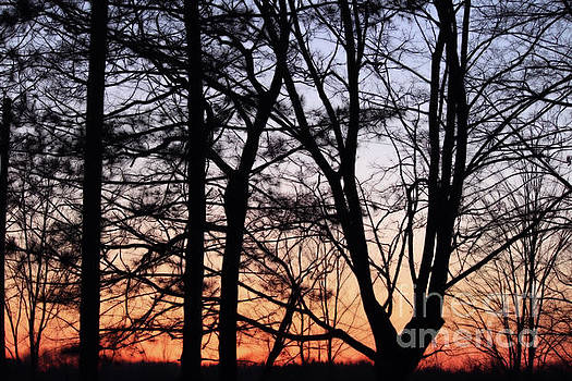 Sunset Through the Trees by Kristi Beers-Mason