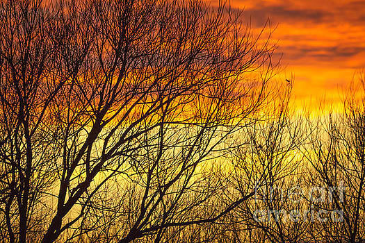 Sunset through the trees by Paul Farnfield