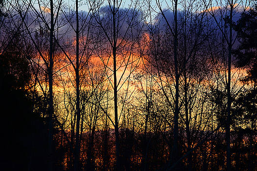 Theresa Pausch - Sunset Through the Trees