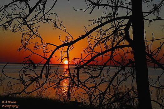 Barbara Bowen - Sunset through the winding Pine