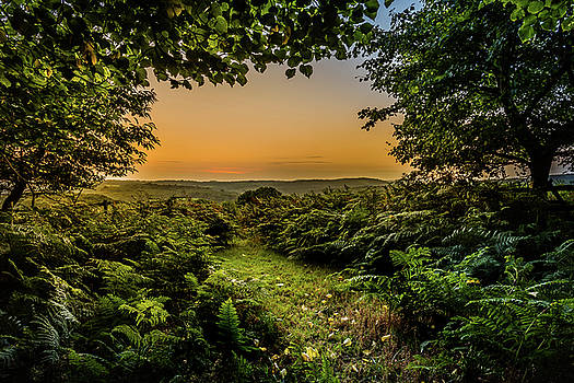 Sunset Through Trees by Nick Bywater