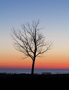 Sunset Tree by Fran Riley