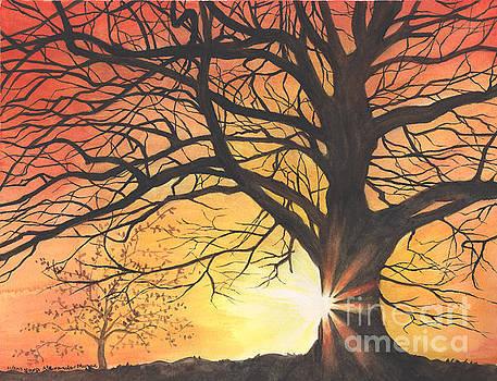 Sunset Tree Shadow by Sara Alexander Munoz