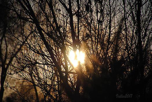 Sunset Tree by Vallee Johnson