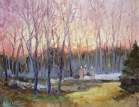 Sunset trees by Irek Szelag