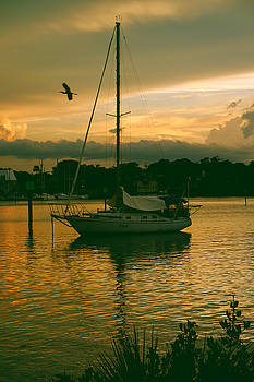 Sunset with Bird by Charles Van Riper