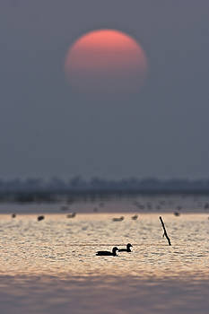 Sunset with coots by Hitendra SINKAR