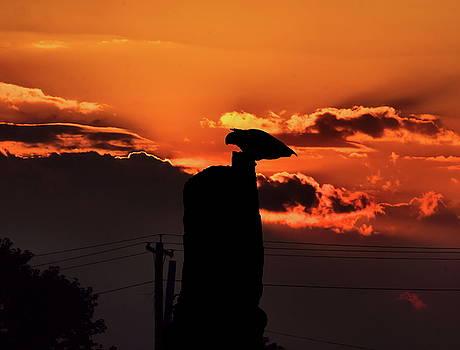 Sunset with Hawk Perching by William Cruz