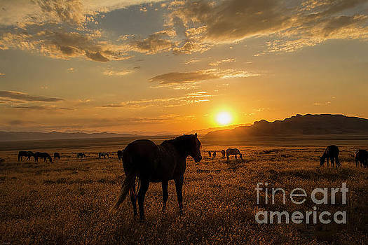 Sunset with the Mustangs  by Nicole Markmann Nelson