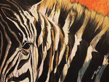Sunset Zebra by Don MacCarthy