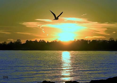 Sunset Zen by Stacie Fernandes