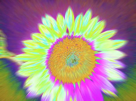 Sunshimmering by Cris Fulton