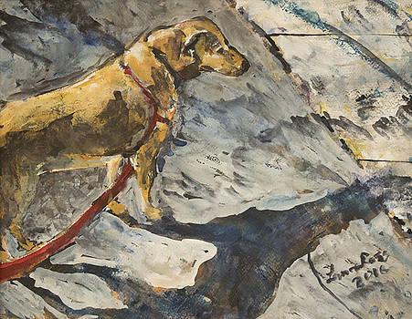 Sunshine Dog by Laura Ross