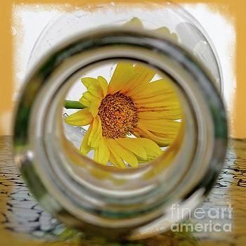 Sunshine in a Bottle by Ella Kaye Dickey