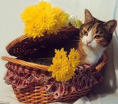 Sunshine in the Spring by Jennifer Ferrier