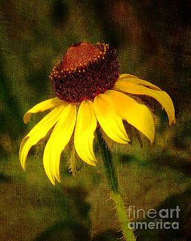 Sunshine by Jennie Breeze