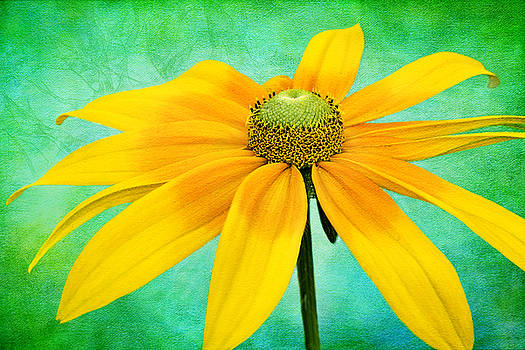 Sunshine by Marina Kojukhova