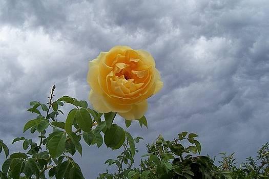 Sunshine on a Cloudy Day by Darlene Propp