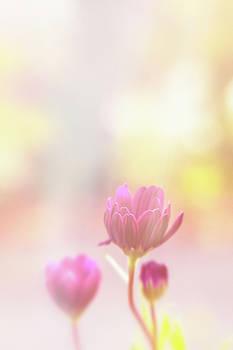 Sunshine on flowers by Susan Schmidt
