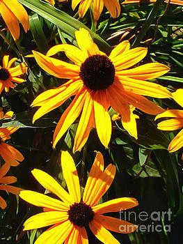 Sunshine Susan by Helene Guertin