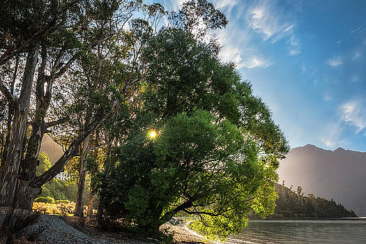 Sunstar behind some trees on the lake shore at Wilson Bay, NZ. by Daniela Constantinescu
