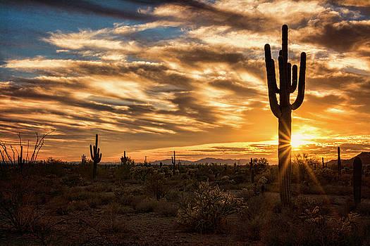 Saija Lehtonen - Sunstar Saguaro Sunset
