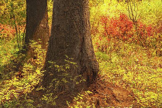 Sunstream by Ramona Murdock