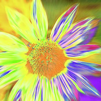 Sunzesty by Cris Fulton