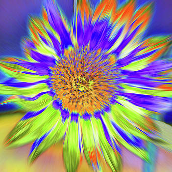Sunzoom by Cris Fulton