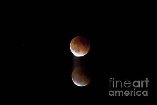Super Bood Moon Lunar Elipse Images 5- 2015 by Janie Johnson