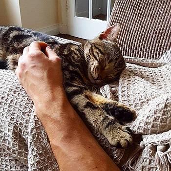 Super Comfy Cat 😻 #cutecat by Dante Harker