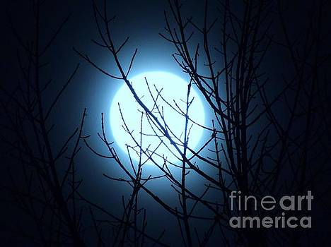 Super Moon 2016 by Lisa Gilliam
