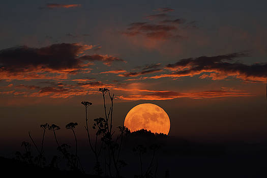John Haldane - Super Moon and Silhouettes
