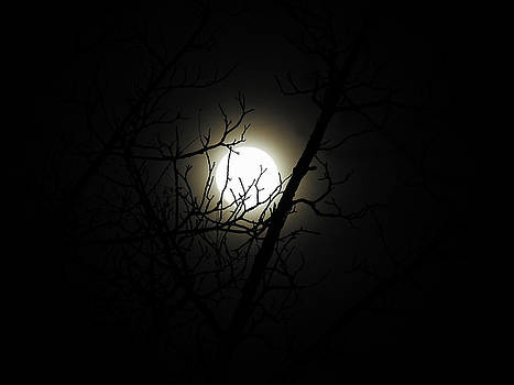 Supermoon 3 by Michele James