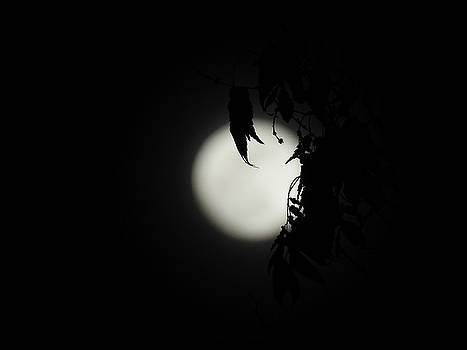 Supermoon 4 by Michele James