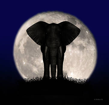 Supermoon Elephant Silhouette by Brian Wallace
