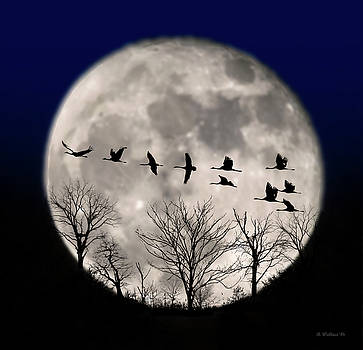 Supermoon Geese Silhouette by Brian Wallace