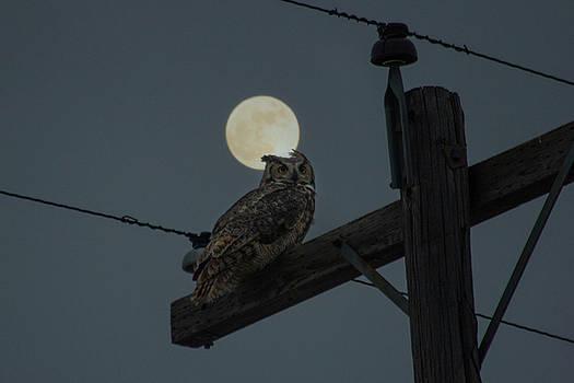 Supermoon Owl  by Aaron J Groen