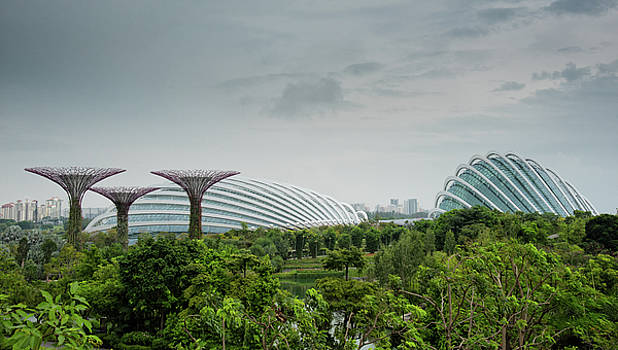 SuperTrees at Gardens by the Bay by Zina Zinchik