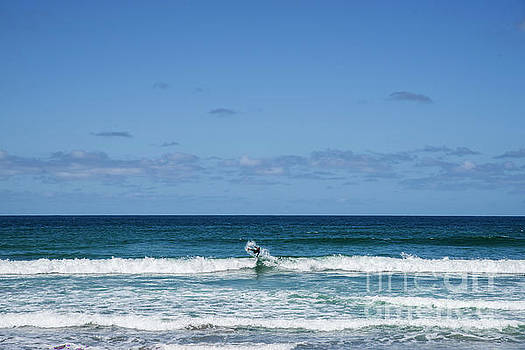 Surf's Up by Cindy Tiefenbrunn